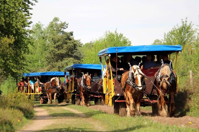 Kutschtouren für größere Gruppen oder für Ihre Festgesellschaft