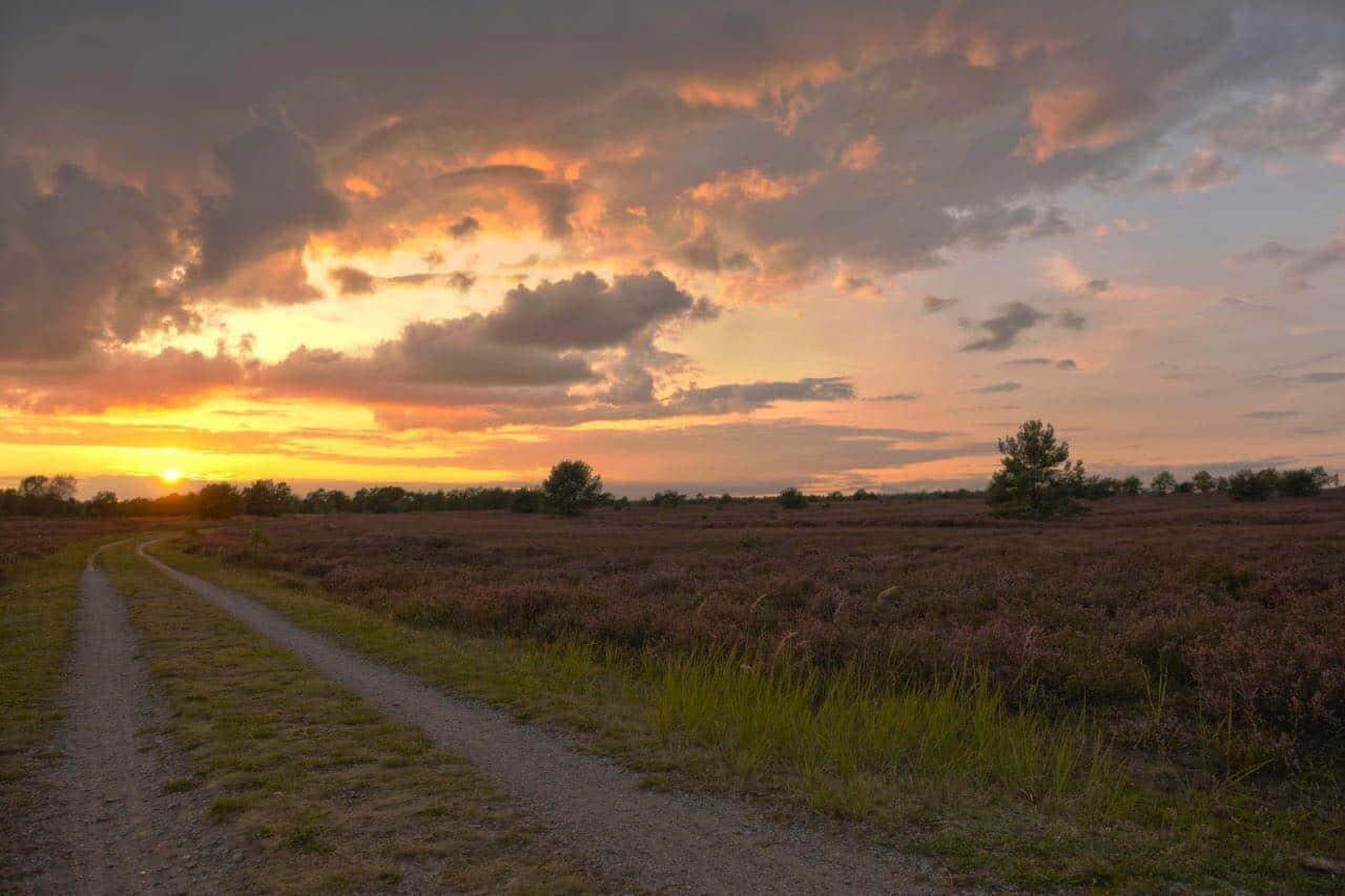 Blühende Heide bei Sonnenuntergang in der Osterheide in Schneverdingen