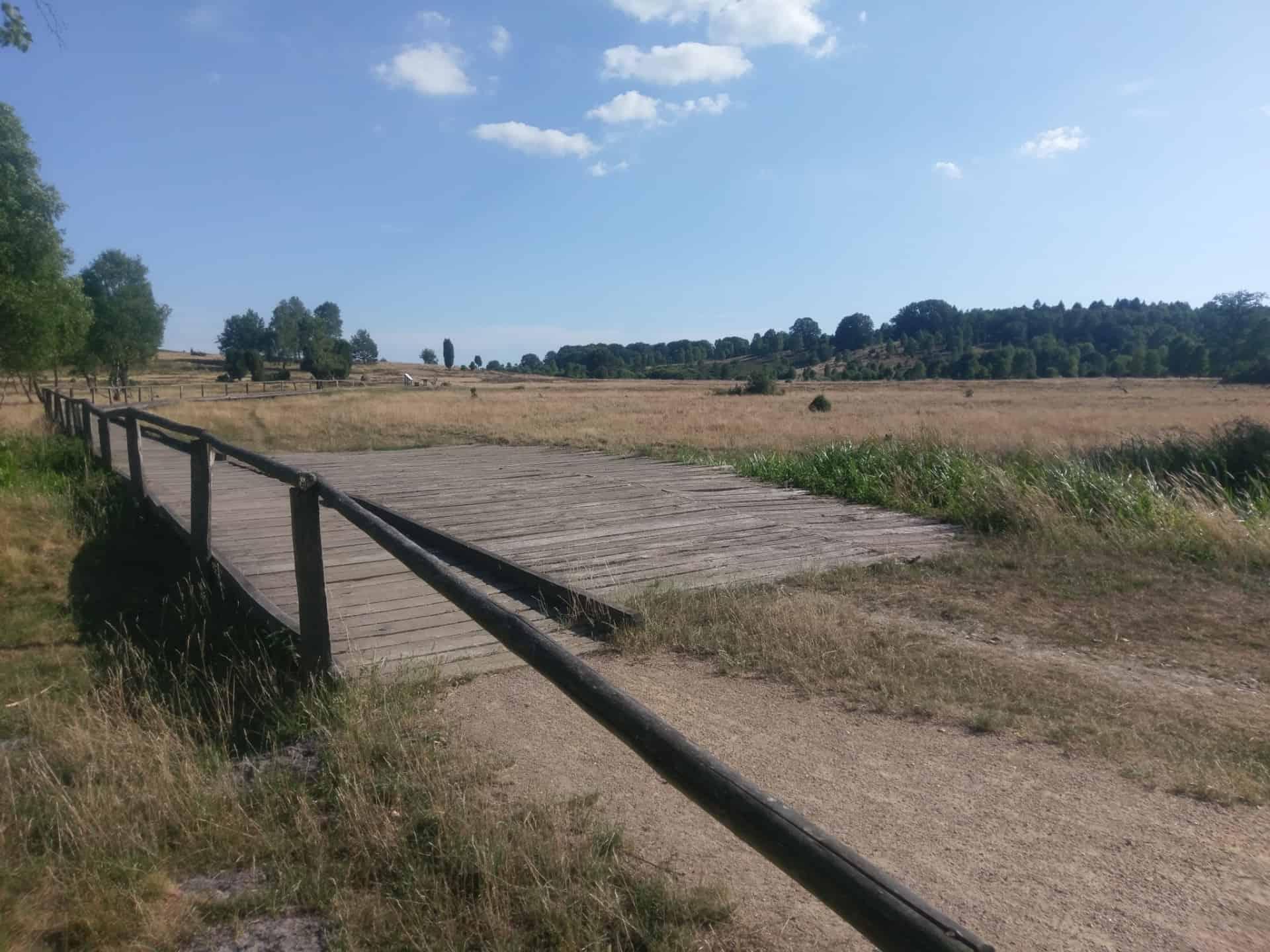 Offene Heidelandschaft bei Niederhaverbeck/Lüneburger Heide