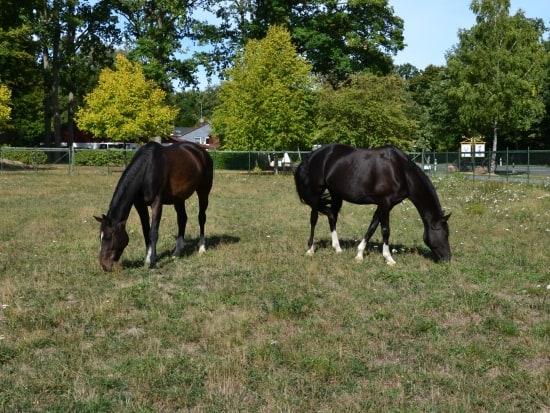 Zwei Pferdewiesen stehen für Reiturlauber zur Verfügung.
