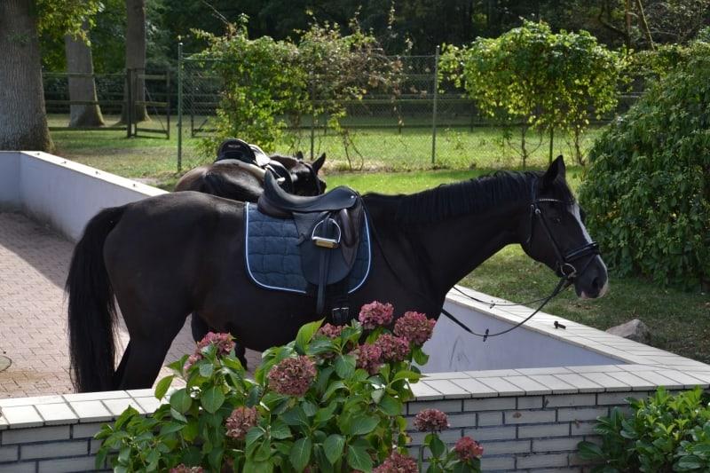 Im Hof Barrl sind Reiter herzlich willkommen!